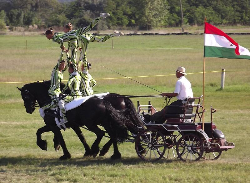 Ötvözték a lovastornát a fogathajtással