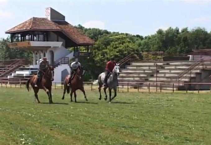 A zobnaticai ménesből három ló versenyzik